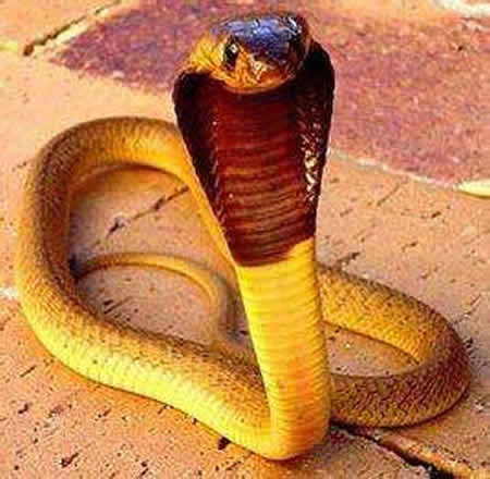 蛇最怕什么动物和植物:蛇最怕什么东西和气味?