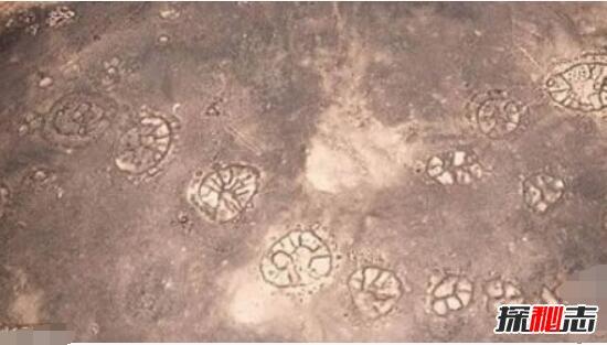 秘鲁纳斯卡线上石轮怪圈图案未解之谜(纳斯卡地画)